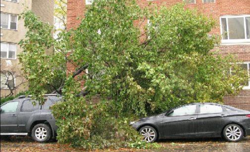 Szkody wyrządzone przez złamane drzewo – kiedy przysługuje odszkodowanie?